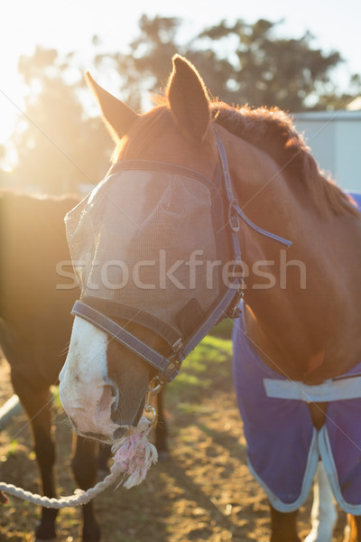 Cheval permanent ranch ferme professionnels Photo stock © wavebreak_media