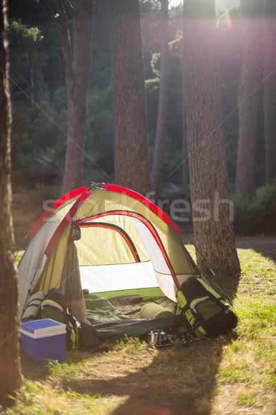 изображение лагерь древесины дерево природы Сток-фото © wavebreak_media