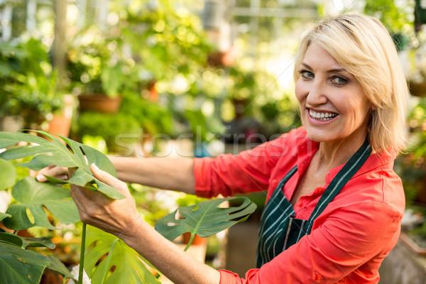 Female gardener smiling while inspecting leaves Stock photo © wavebreak_media