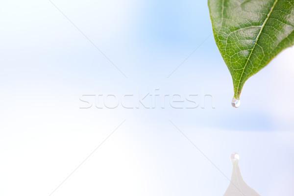 Folha céu água ar Foto stock © wavebreak_media