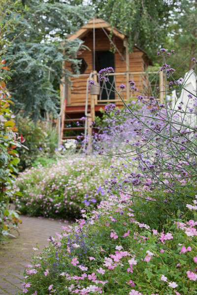 Garden of purple flowers with path and shed Stock photo © wavebreak_media
