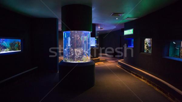 Lit up fish tanks Stock photo © wavebreak_media