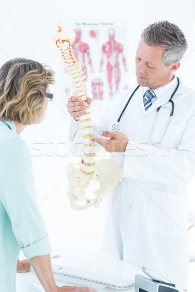 Stock photo: Doctor pointing anatomical spine