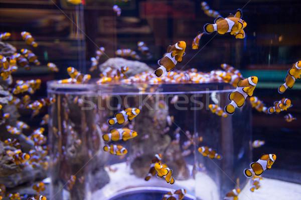 Fish swimming in a tank Stock photo © wavebreak_media