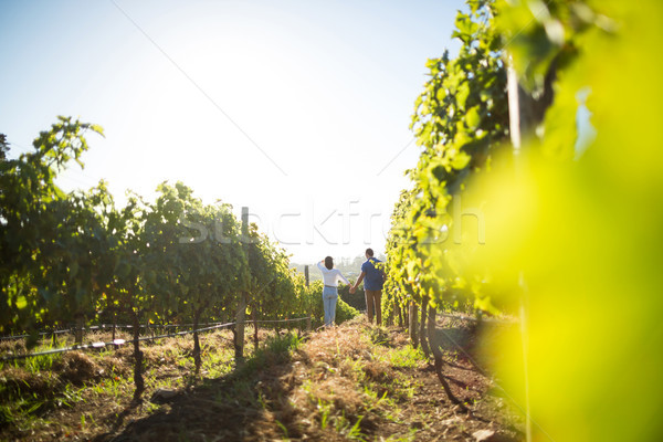 Distant view of couple holding hands at vineyard Stock photo © wavebreak_media