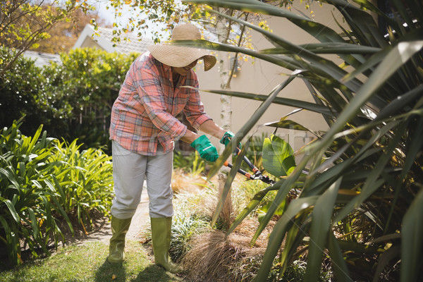 Senior woman cutting grass in yard Stock photo © wavebreak_media