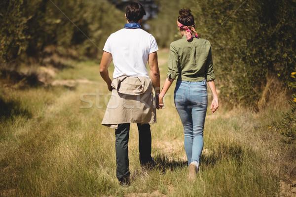 Rear view of couple walking at olive farm Stock photo © wavebreak_media
