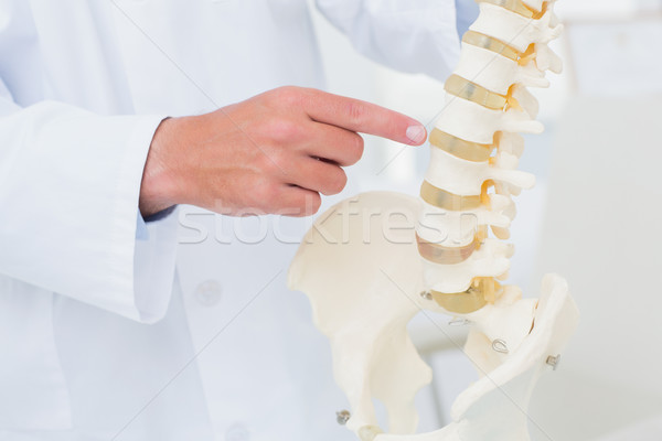 Doctor pointing at anatomical spine Stock photo © wavebreak_media