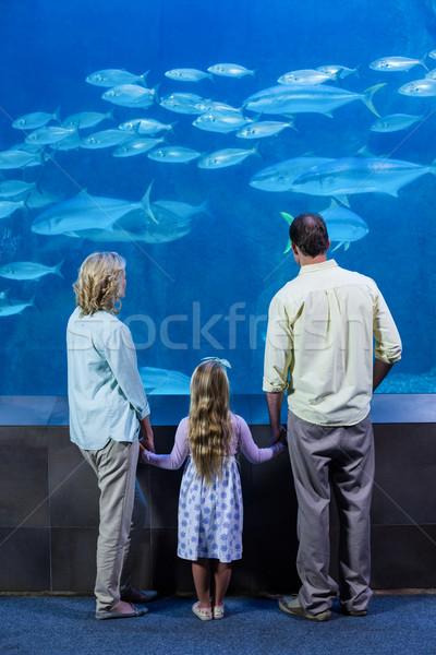 Família feliz olhando peixe tanque aquário mãos Foto stock © wavebreak_media