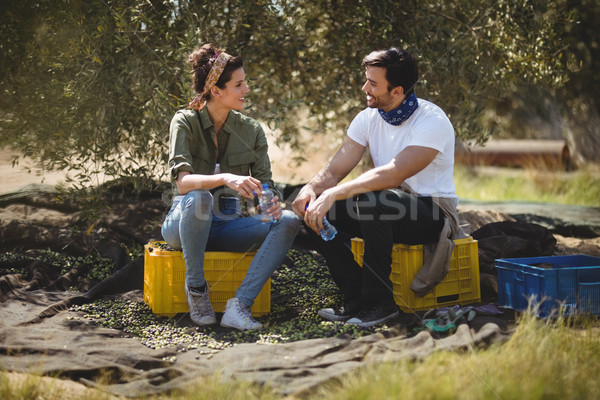 говорить сидят оливкового фермы улыбаясь Сток-фото © wavebreak_media