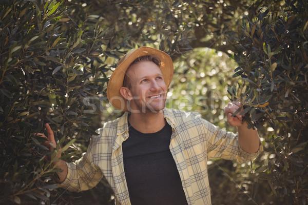 молодым человеком Постоянный деревья оливкового фермы Сток-фото © wavebreak_media