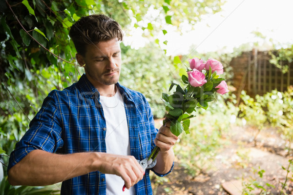 Man trimming flowers with pruning shears in garden Stock photo © wavebreak_media