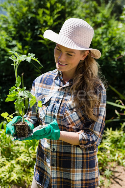 Happy woman holding sapling in garden Stock photo © wavebreak_media
