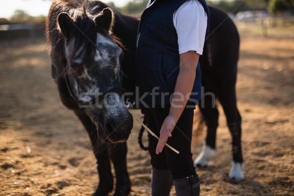 Boy feeding the horse in the ranch on a sunny day Stock photo © wavebreak_media