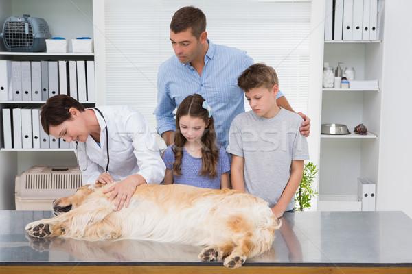 Sonriendo veterinario examinar perro miedo propietarios Foto stock © wavebreak_media