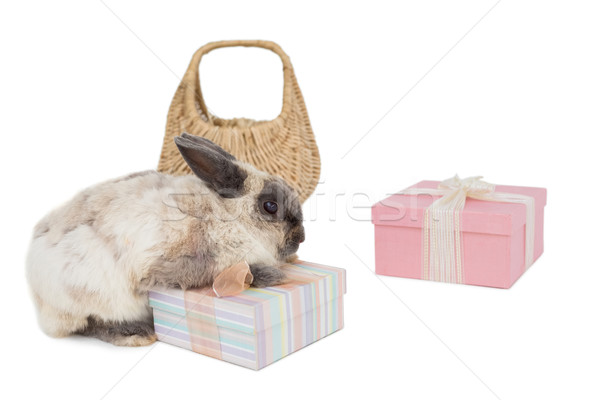 Fluffy bunny with gift boxes and wicker basket Stock photo © wavebreak_media
