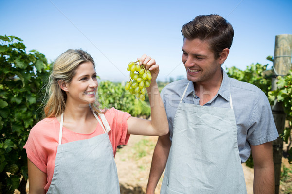 Smiling couple holding grapes at vineyard Stock photo © wavebreak_media