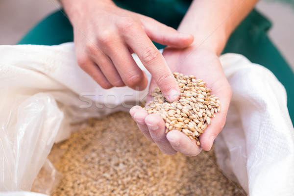 Cropped hand of worker examining barley at factory Stock photo © wavebreak_media