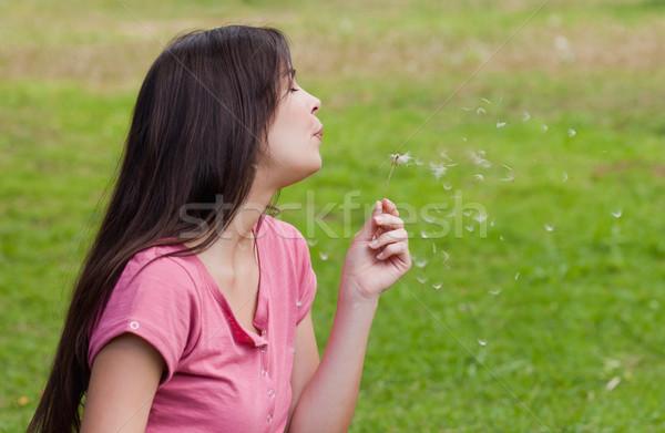 Jonge vrouw permanente platteland paardebloem gras Stockfoto © wavebreak_media
