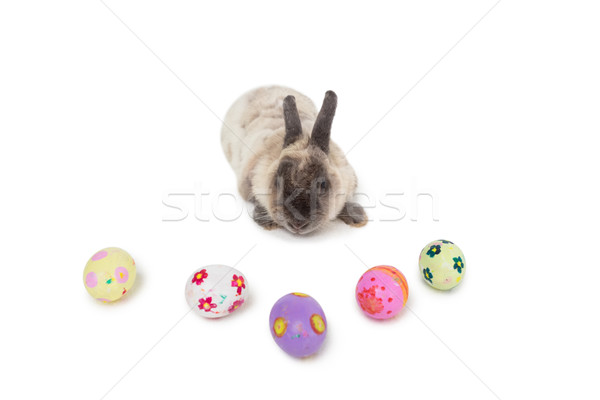 Fluffy bunny with Easter eggs Stock photo © wavebreak_media