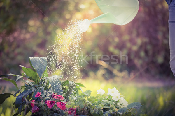 Watering can pouring water over flowers Stock photo © wavebreak_media