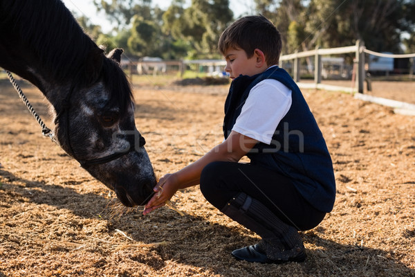 Boy feeding the horse in the ranch Stock photo © wavebreak_media