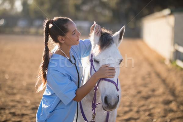 側面図 女性 獣医 馬 耳 立って ストックフォト © wavebreak_media
