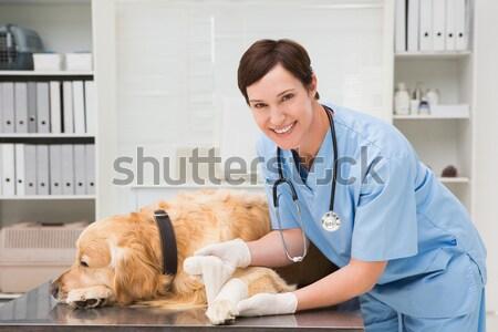 Сток-фото: портрет · женщину · ветеринар · кошки · хирургии