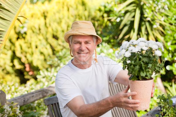 Senior homem flores jardim flor primavera Foto stock © wavebreak_media