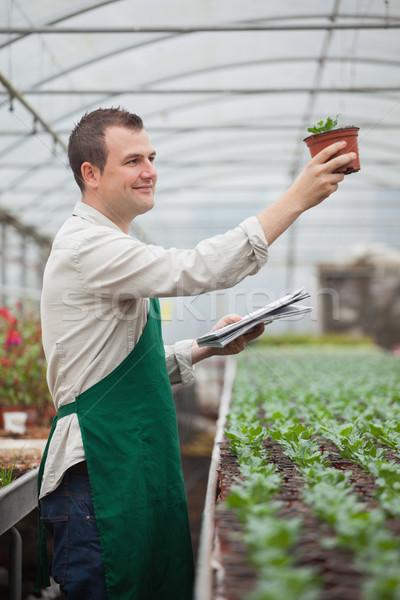 Jardineiro plântula estufa mãos Foto stock © wavebreak_media