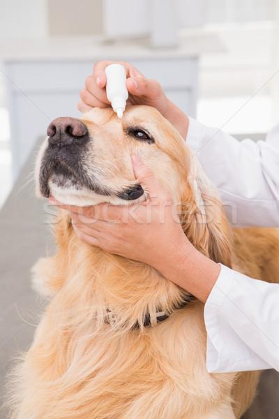 állatorvos megvizsgál aranyos kutya orvosi iroda Stock fotó © wavebreak_media