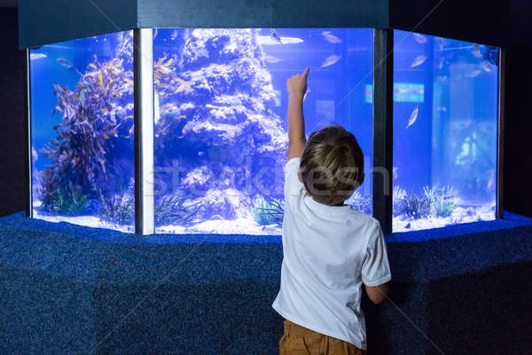 Joven senalando peces tanque detrás cámara Foto stock © wavebreak_media