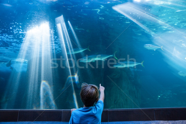 Jeune homme pointant poissons réservoir doigt aquarium Photo stock © wavebreak_media