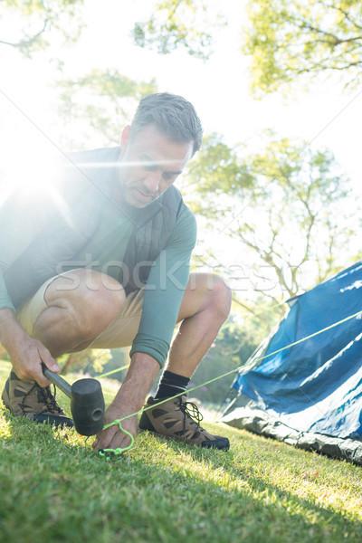 Adam yukarı çadır ağaç Stok fotoğraf © wavebreak_media