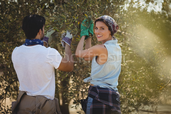 Smiling young woman with man plucking olives at farm Stock photo © wavebreak_media