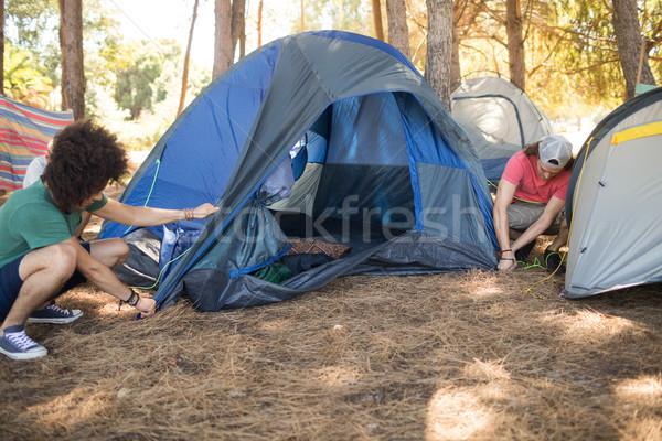 Stock fotó: Férfi · barátok · készít · sátor · mező · erdő