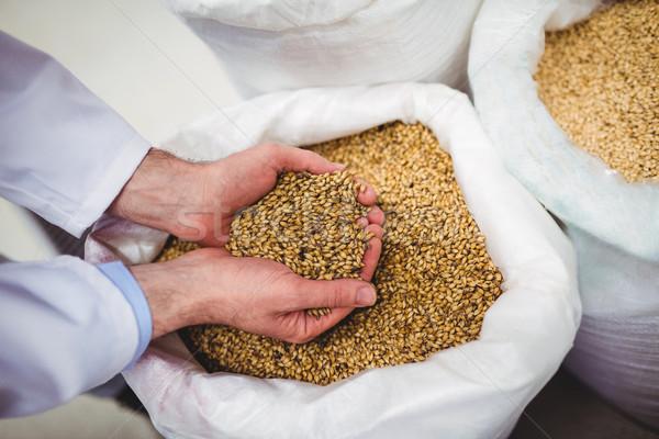 Manufacturer holding barley at brewery Stock photo © wavebreak_media