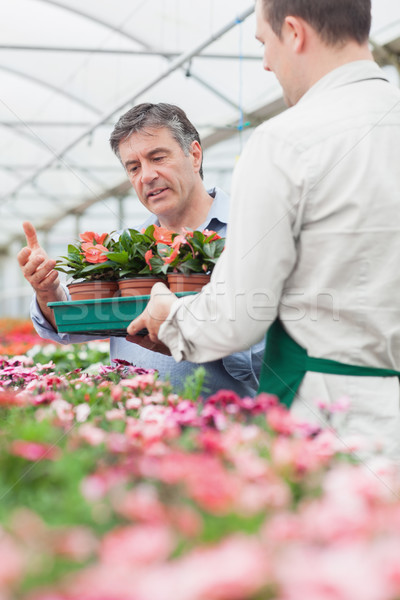Florist holding a box of flowers and giving it to the man as he is looking at them in greenhouse Stock photo © wavebreak_media