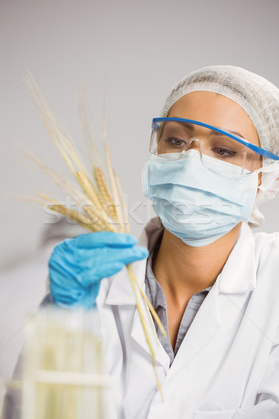 Food scientist looking at wheat Stock photo © wavebreak_media