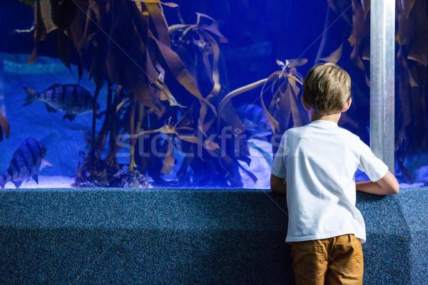 Jonge man naar vis tank aquarium natuur Stockfoto © wavebreak_media