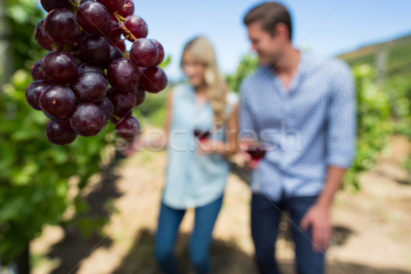 Grapes hanging on plant with couple in background Stock photo © wavebreak_media