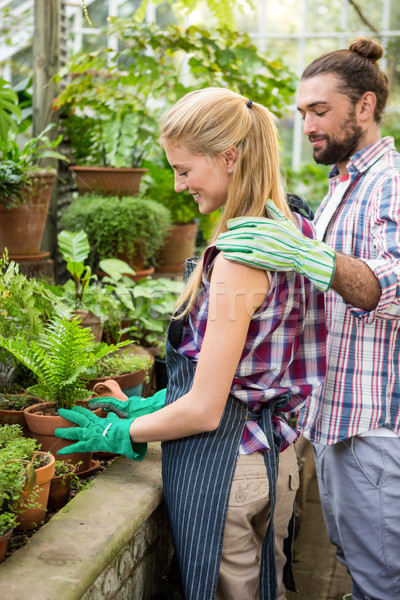 Colleagues placing potted plant in greenhouse Stock photo © wavebreak_media