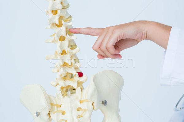 Arts wijzend anatomisch wervelkolom witte Stockfoto © wavebreak_media