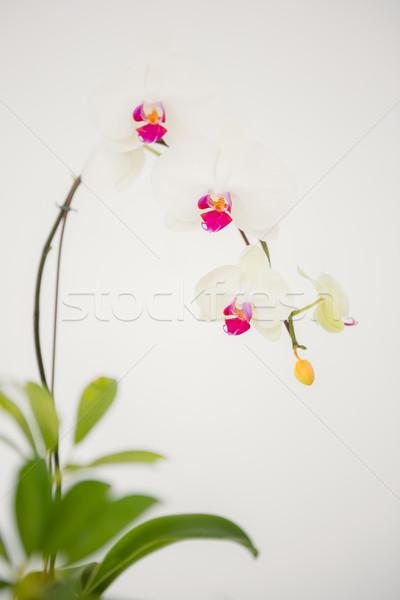 幹 ピンクの花 白 花 葉 工場 ストックフォト © wavebreak_media
