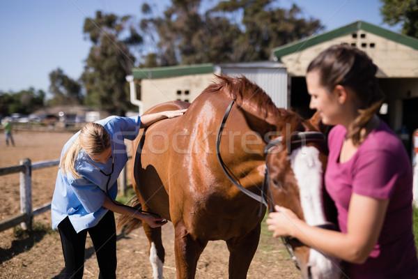 Сток-фото: ветеринар · женщину · лошади · Постоянный · области