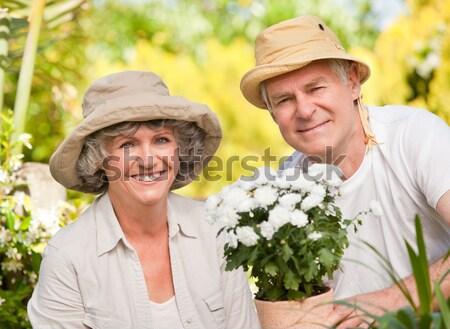 Senior woman cutting flower with pruning shears Stock photo © wavebreak_media