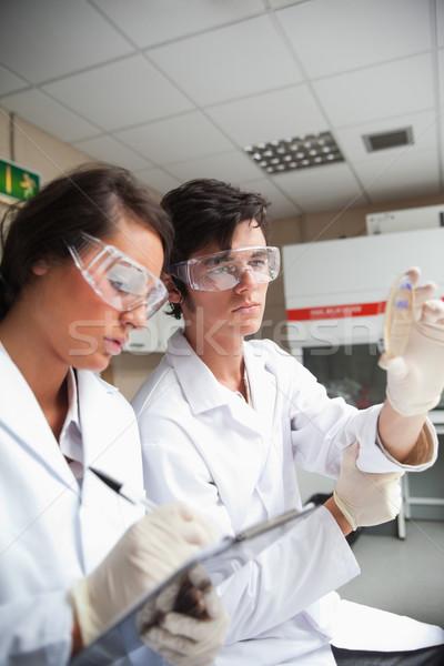Retrato estudantes ciência olhando prato laboratório Foto stock © wavebreak_media