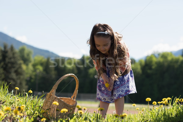 Cute girl collecting flowers from field Stock photo © wavebreak_media