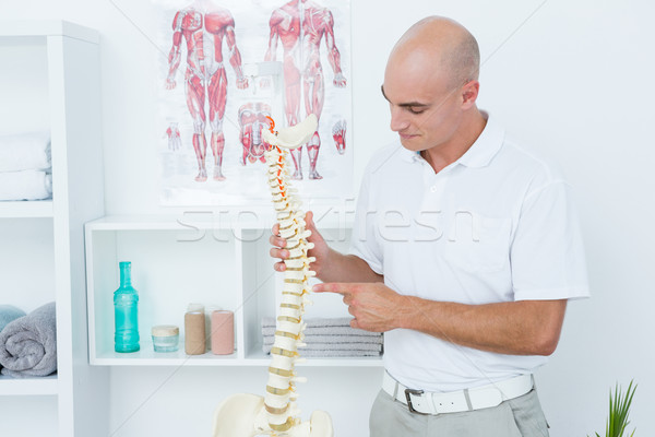 Médico anatómico espina médicos oficina Foto stock © wavebreak_media