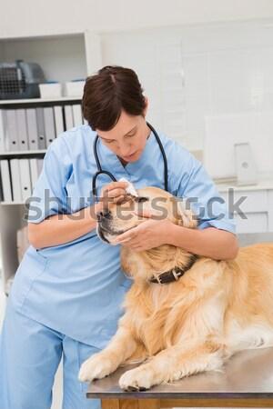 Сток-фото: портрет · женщину · ветеринар · кошек · ушки